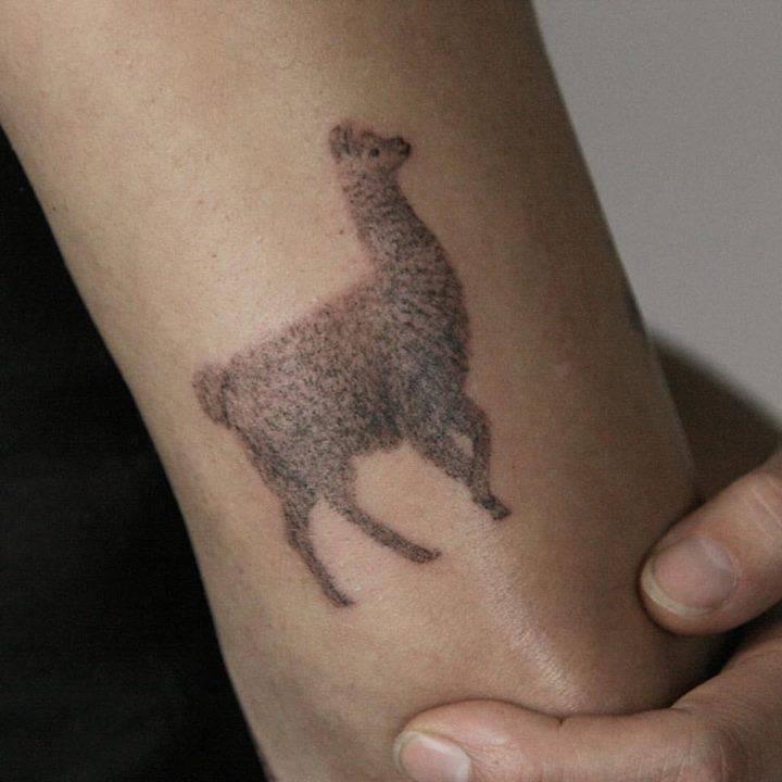 Llama for Brigitte! Such a fun day.
