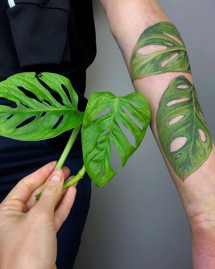 boom! baby Monstera leaves with the roots or Monkey Mask
