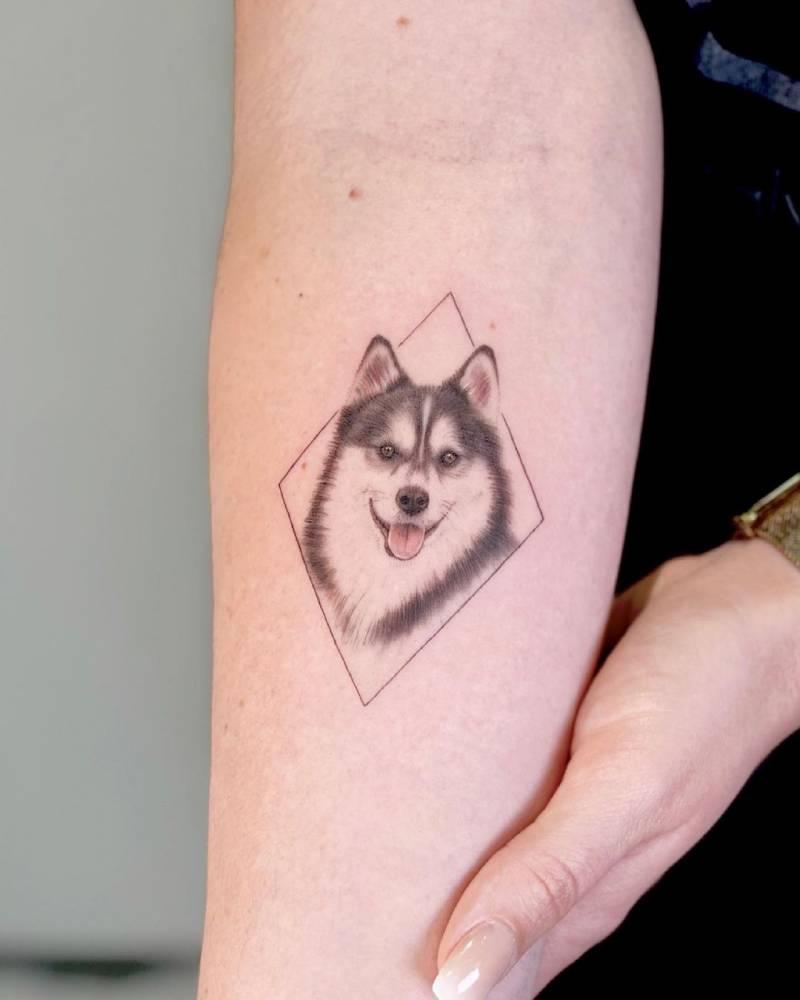 Micro-realistic Pomsky (Pomeranian + Husky) tattoo on the inner forearm.