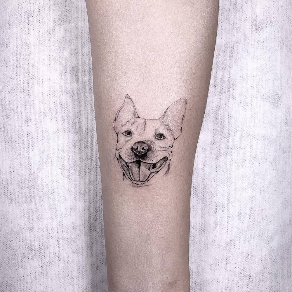 Micro-realistic pit bull portrait tattoo on the inner forearm.